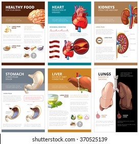 Internal human organs chart diagram infographic. Brain and heart, liver and stomach, lung and kidney, health medical science. Vector illustration brochure template