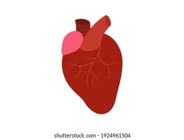 Internal organs of the human, Heart icon, Healthy heart, Cartoon vector illustration.