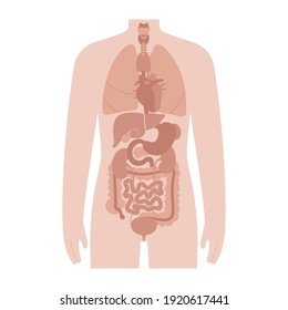 Internal organs in a man body. Stomach, heart, kidney and other medical icon of organs in male silhouette. Digestive, respiratory, cardiovascular systems. Medical anatomy poster vector illustration.