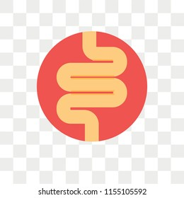 Intestines vector icon isolated on transparent background, Intestines logo concept