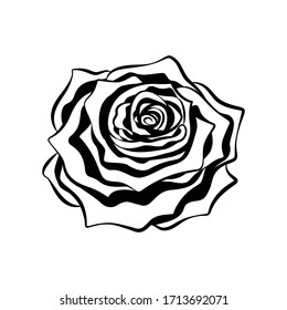 Intricate rose flower tribal ethnic tattoo detailed outline silhouette vector illustration design.