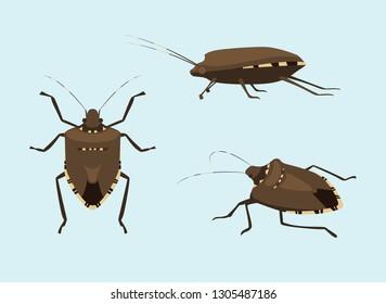 Invasive Species BROWN MAMORATED STINK BUG Vector Illustration