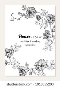 Invitation and greeting card design with Butterfly pea flower drawing  illustration.