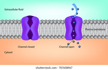 Ion Channel. Cell membrane illustration. Structure of the plasma membrane