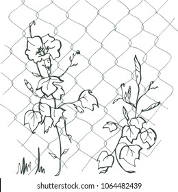 Ipomoea on the grid.Blue Ipomoea.Children's illustration, the flowers are crawling on the grid. Creeping flowers.