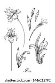 Iris flower, fleur-de-lis, flower-de-luce, flag. Element for design. Outline hand drawing vector illustration. In art nouveau style, vintage, old, retro style. In botanical style