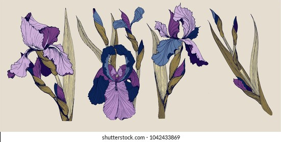 Iris flowers vector clip art set of four isolatet botany  toile de joy images