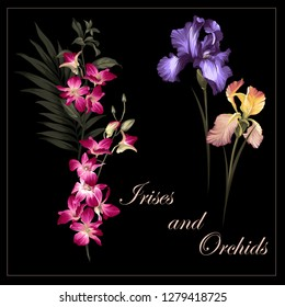 irises and orchids. flowers on the black background