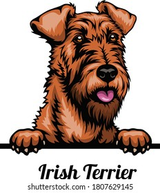 Irish Terrier - Color Head Dog - vector stock illustration isolated on white