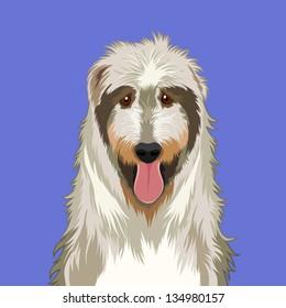 Irish wolfhound, The buddy dog