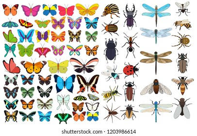 isolated, big set of insects and butterflies