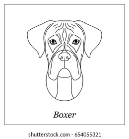 Boxer Dog Images Stock Photos Vectors Shutterstock