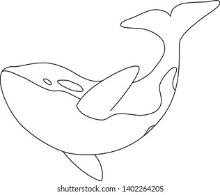 Isolated black outline orca whale on white background. Killer whale. Line sea animal.