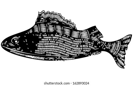 Isolated black and white vector illustration ink drawing of a patterned perch fish with gills and tail