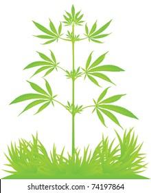 Isolated cannabis plant vector illustration