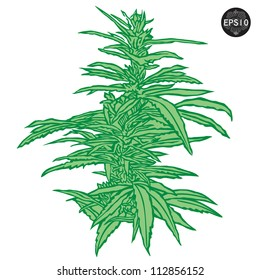 Isolated cannabis plants vector illustration