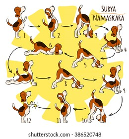 Isolated cartoon funny dog doing yoga position of Surya Namaskara. San Salutation. Beagle vector illustration