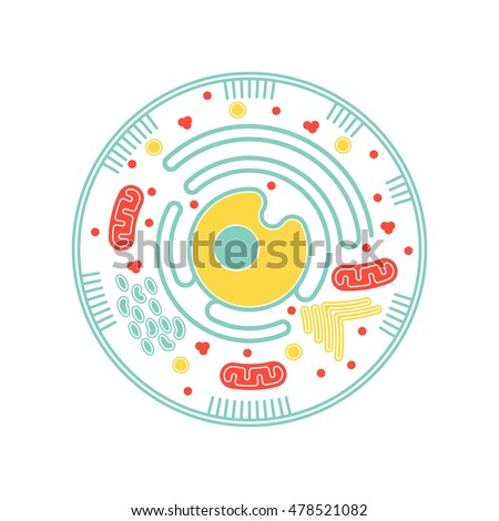Isolated Cell Biology Pictogram Cell Anatomy Stock Vector Royalty