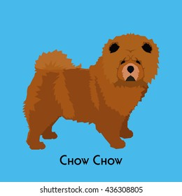 Isolated chow chow on a blue background