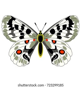 Isolated colorful vector illustration of an Apollo butterfly. Mountain Apollo. Parnassius apollo.