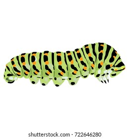 Isolated colorful vector illustration of a caterpillar of black swallowtail butterfly. Papilio polyxenes.