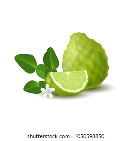 Isolated colorfull green whole and slice of juicy bergamot, kaffir lime with green leaves, white flower and shadow on white background. Realistic wedge citrus fruit.