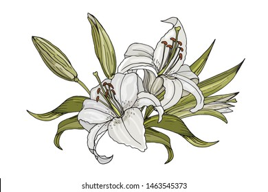 The isolated composition of white lilies. Hand drawn flowers.Made by trace from sketch. The illustration can be used for greeting cards or wedding invitations.