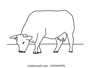 Isolated cow eating grass on a white background. Black and white sketch line silhouette vector illustration.
