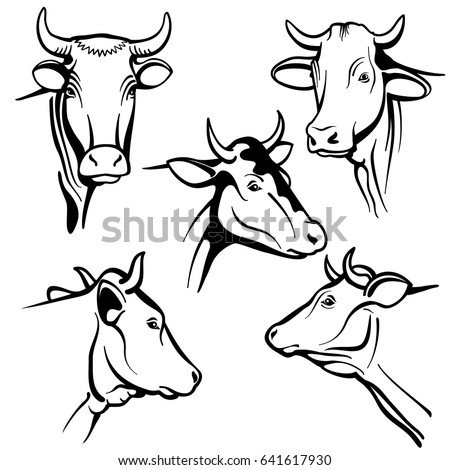 Isolated Cow Head Vector Portraits Cattle Stock Vector Royalty Free