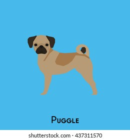Isolated cute puggle on a blue background