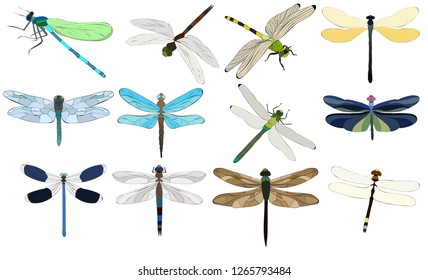 isolated, dragonfly flies, insect, set