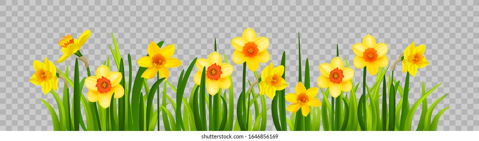 Isolated Easter blossom banner with daffodils