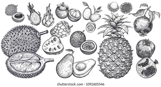 Isolated exotic fruits. Pineapple, avocado, pomegranate, lychee, durian, passion fruit, kumquat, cherimoya, dragonfruit, mangosteen and rambutan. Black and white. Vintage vector illustration.