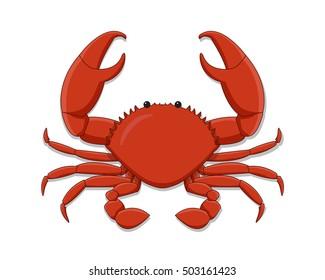 Isolated Flat whole crab on white background
