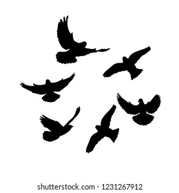 isolated, flock of birds flying, black silhouette