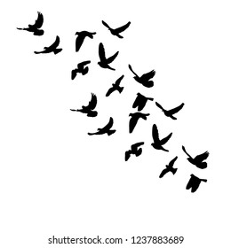 isolated, a flock of flying birds, black silhouette of pigeons fly