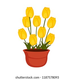 Isolated flower pot with tulip flowers