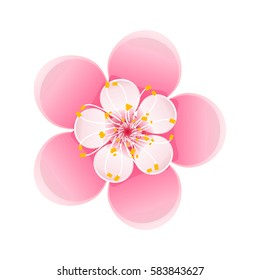 Isolated flower of sakura. Cartoon pink and white blossom of Japanese cherry tree. Vector clip art  illustration.