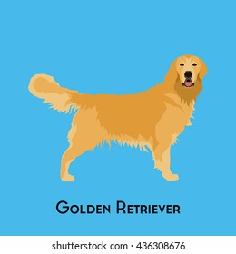 Isolated golden retriever on a blue background