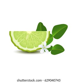 Isolated half of circle juicy green color bergamot with leaf, white flower and shadow on white background. Realistic colored slice
