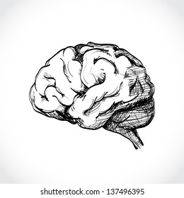 Isolated human brain sketch - illustration
