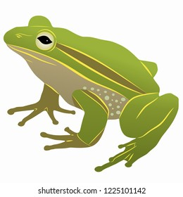 isolated illustration of a frog, colored drawing, white background