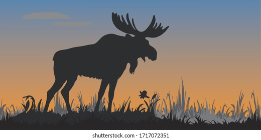 isolated image of a powerful moose standing, black silhouette , against the evening sky