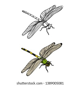 isolated, insect dragonfly, sketch, lines