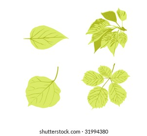 Isolated leaves