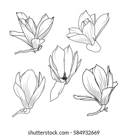Isolated magnolia sakura flowers close up view collection set. Detailed realistic black outline sketch on white background. Vector design illustration reusable element.