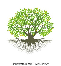 isolated mangrove tree plant on a white background, vector illustration