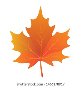 Isolated maple leave. Maple leaves in autumn. Vector EPS 10.