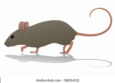 isolated mouse illustration, colored drawing, white background