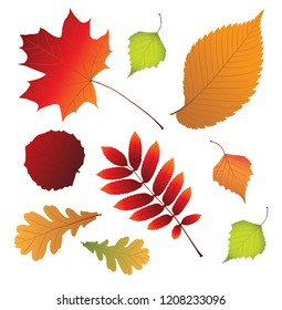 Isolated multicolor autumn leaves. vector illustration